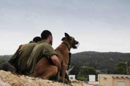 بالصور : تعرفوا على وحدة الكلاب المدرّبة في جيش الاحتلال
