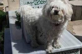 ابنة رفيق السباعي تصطحب كلبها ليقف على قبر والدها والجمهورغاضب!!