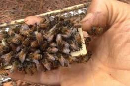 فيديو.. أسراب النحل تقتحم مقصورة سائق وتسافر معه
