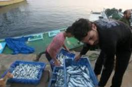 هكذا يغشون الاسماك المصرية الواردة الى غزة عبر الانفاق !!!