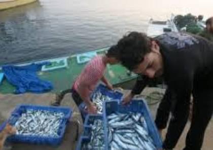 الاسماك المصرية تخترق الحصار الى اسواق غزة