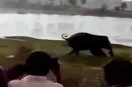 فيديو.. فيل ضخم يدعس رجلاً بأقدامه حتى الموت!