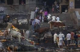 """وفاة مسلم في الهند بالضرب المبرح بسبب """"بقرة"""""""