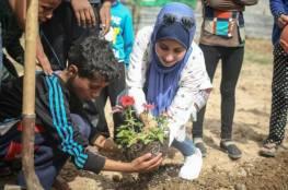 زرع أشتال زيتون بالقرب من حدود غزة