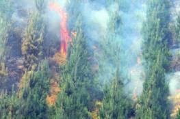 البرتغال: مقتل العشرات في حرائق الغابات