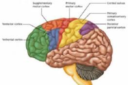 """دراسة: طريقة قمع الدماغ هي سبب """"العين الكسولة"""""""