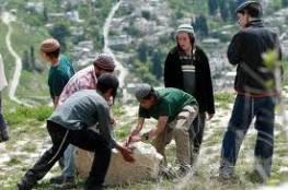 مستوطنون يقطعون أشتال زيتون ويرشون المزروعات بالمبيدات السامة جنوب الخليل