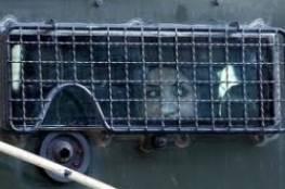 الاحتلال يعتقل أسيرة محررة وعائلتها من مخيم عايدة شمال بيت لحم