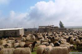 الزراعة تورد الى غزة لقاحات لأمراض تصيب الاغنام