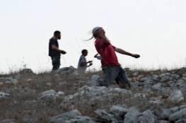 مستوطنون يقطعون 700 دالية عنب شرق الخليل