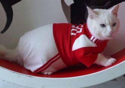 قط روسي يتنبأ بنتائج مباريات كأس العالم..!؟