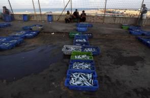 صيادوا غزة يعرضون بضاعتهم من السمك