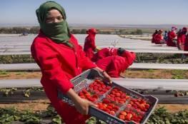 السعودية تحظر استيراد الفراولة المصرية