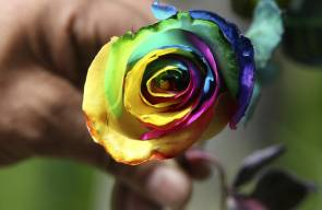 الاحتفال بعيد الحب في جميع أنحاء العالم