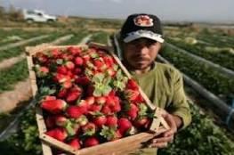 ينيت يأمر بوقف استيراد المنتجات الزراعية من الأراضي الفلسطينية