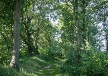 تمشّوا وسط الأشجار وانغمِسوا في الطبيعة تصحوا