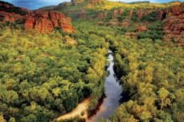 """تمساح """"يختطف"""" حارسة غابات شمالي أستراليا"""