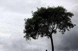 النساء يتزوجن الأشجار في المكسيك!