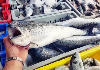 7 فوائد صحية لسمك السلمون