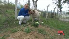 كلب يزور صاحبه المتوفَّى كل يوم منذ عام.. يضع رأسه على القبر 5 دقائق ويعود