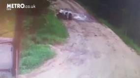 كلاب ضالة تُحيط برجل وتقتله بطريقةٍ بشعة في دقيقتين فقط!