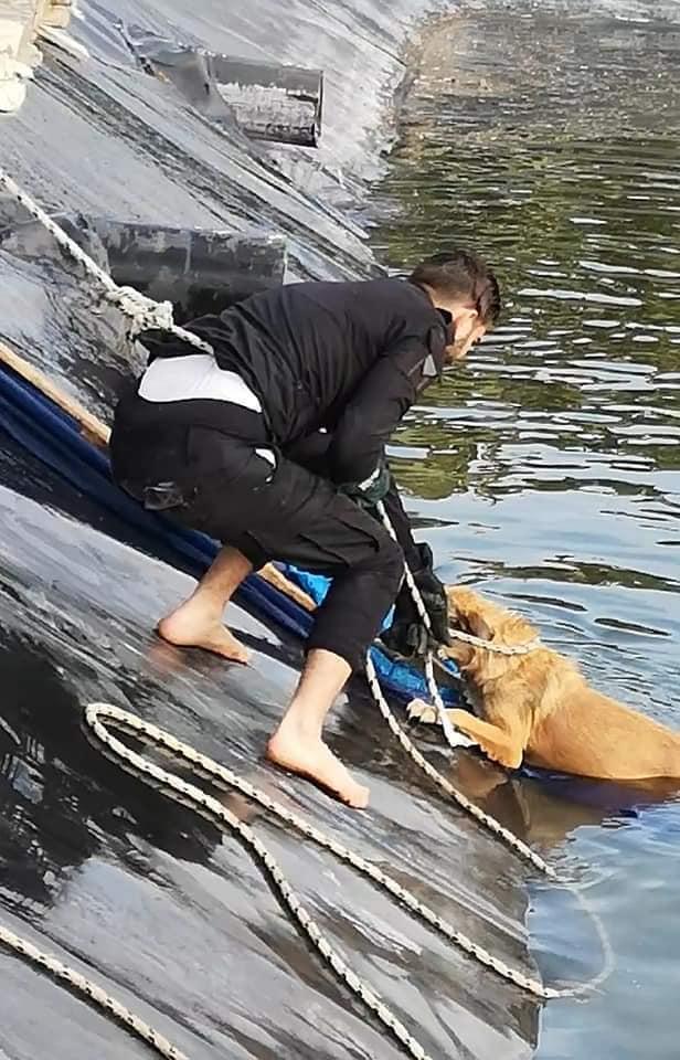 صور: الدفاع المدني في غزة ينقذ كلبين علقا في بركة ماء - سما الإخبارية