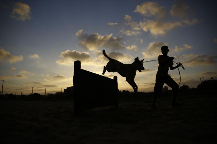 """تيلغراف البريطانية : """"حماس"""" تحظر تجول المواطنين بصحبة الكلاب في غزة"""